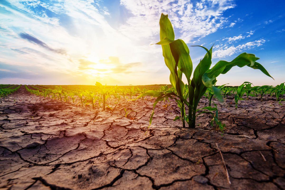 Daños por sequía; Seguro Agropecuario